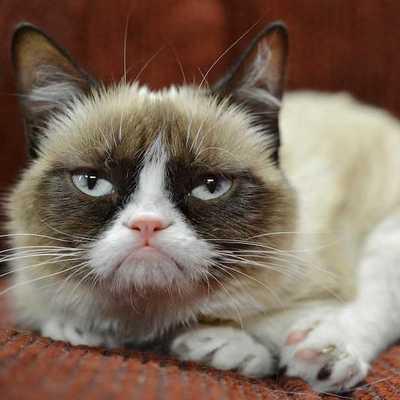 Bu Kedinin 200 Milyon Doları Var