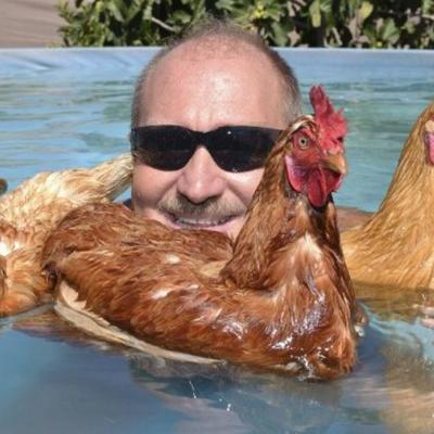 Tavuklar Ördekler Kadar İyi Yüzer! 23 İlginç Bilgi