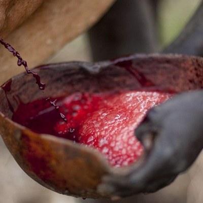 Kan ile Pişirilen 11 Yemek